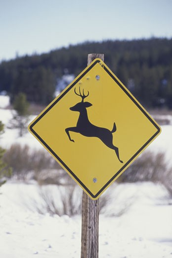 Deer sign : Stock Photo