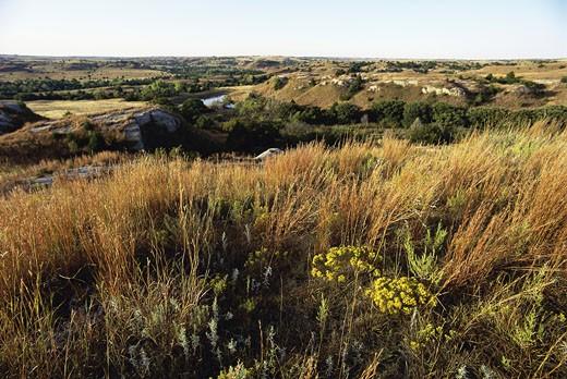 Hilly landscape, Kansas, USA : Stock Photo