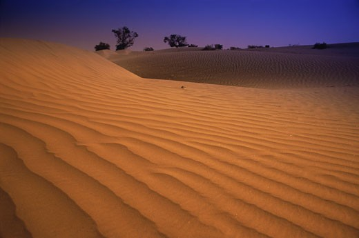 Sand dunes, Jaisalmer, Rajasthan, India : Stock Photo