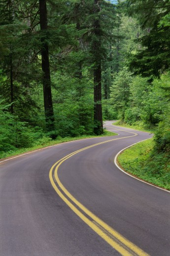 Road passing through a forest, Willamette National Forest, Oregon, USA : Stock Photo