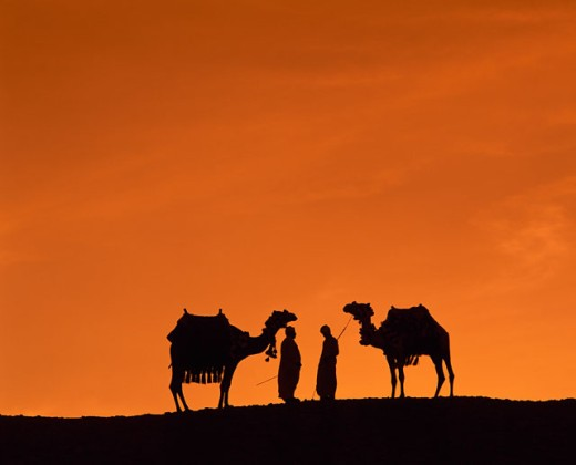 Stock Photo: 1574R-23748 Silhouette of two people standing with two camels in a desert, Cairo, Egypt