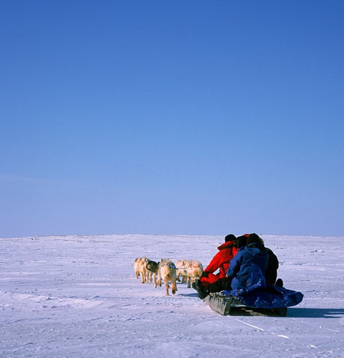 Two people riding a sled pulled by huskies, Cambridge Bay, Nunavut, Canada : Stock Photo