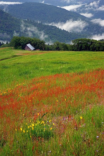 Stock Photo: 1574R-25103 Flowers in a field, Redwood National Park, California, USA