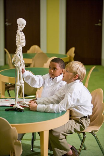 Schoolboys looking at a model skeleton in the library : Stock Photo