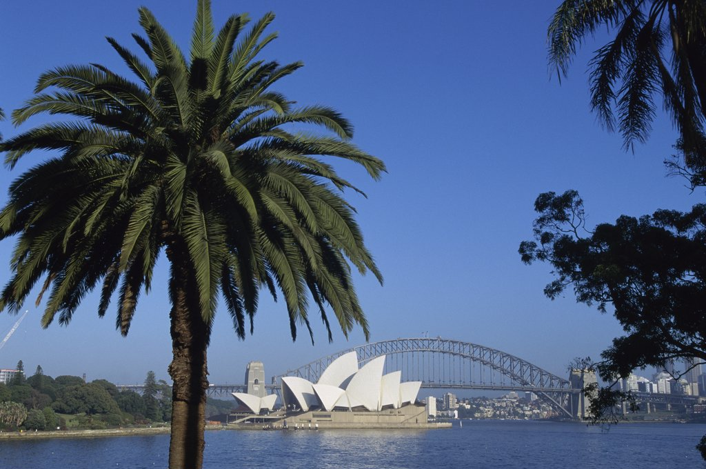 Palm trees in front of the Sydney Opera House, Sydney, Australia : Stock Photo