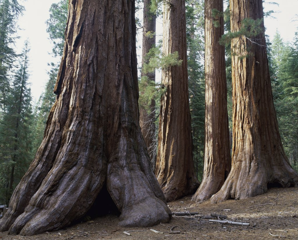 Yosemite National Park California USA : Stock Photo