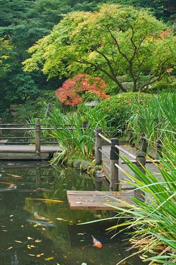 Trees with a pond in a garden, Japanese Garden, Portland, Oregon, USA : Stock Photo