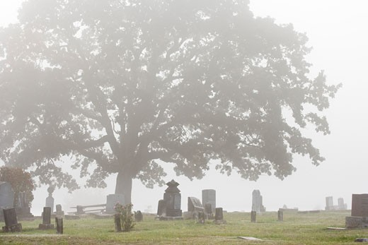 Tree in a cemetery, Willamette Valley, Oregon, USA : Stock Photo