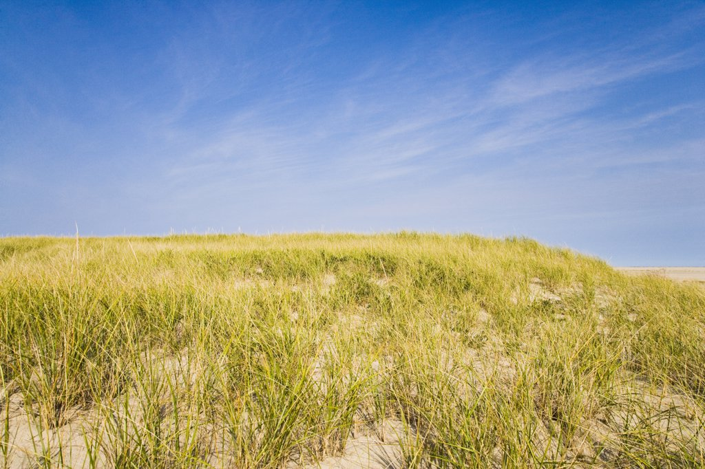 Tall grass on the beach, Cape Cod, Massachusetts, USA : Stock Photo