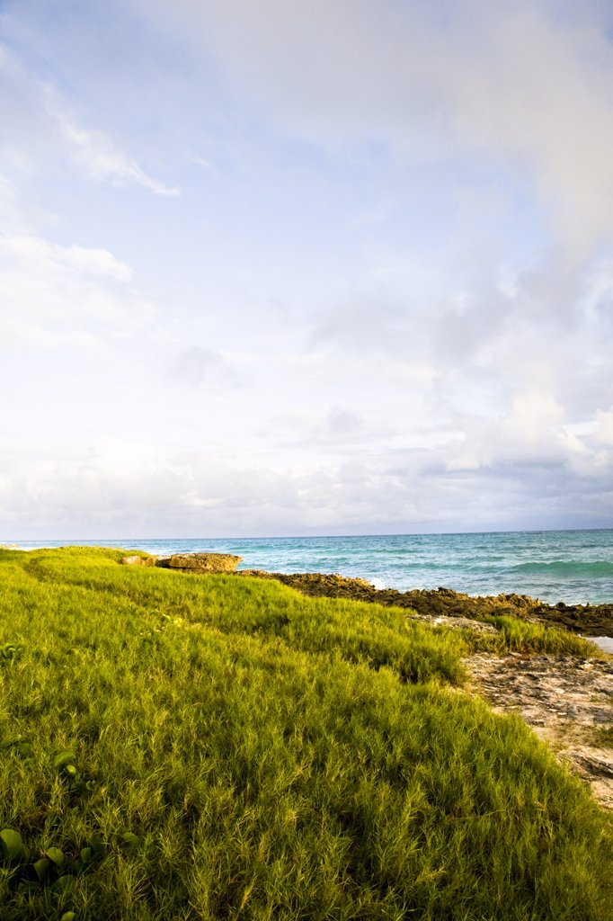 Stock Photo: 1574R-36893 Vegetation at the coast