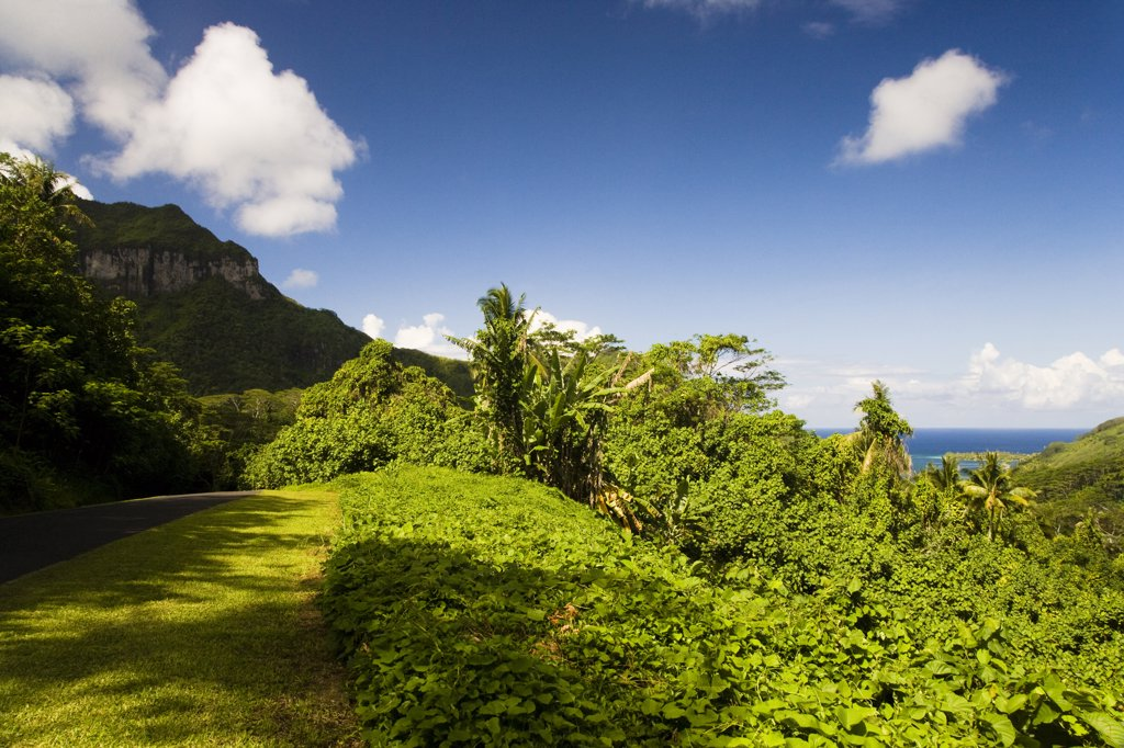 Trees in a forest, Huahine Island, Tahiti, French Polynesia : Stock Photo