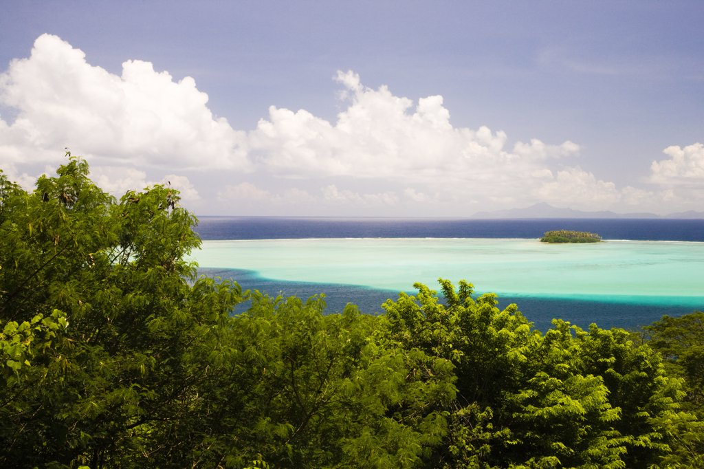 Forest at the seaside, Raiatea Island, Tahiti, French Polynesia : Stock Photo