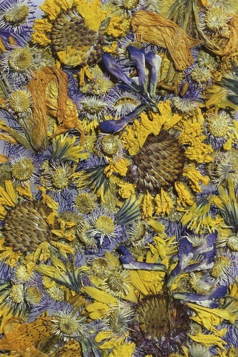 Close-up of dried flowers : Stock Photo