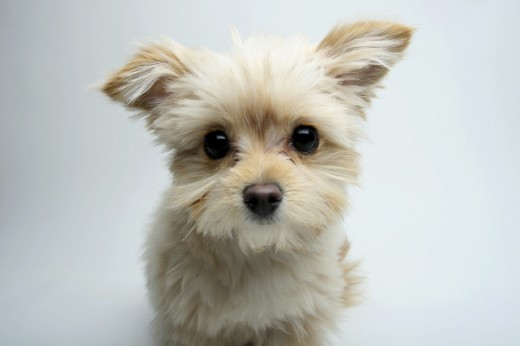 Close-up of a mixed breed puppy : Stock Photo