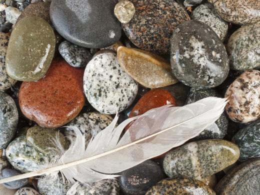Stock Photo: 1574R-37099 Gull feather on sand, San Juan Islands, Washington, USA