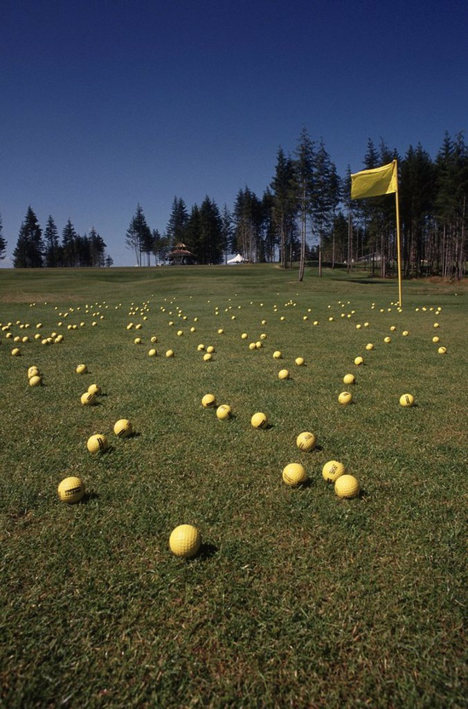 golf green with yellow golf balls and yellow flag : Stock Photo