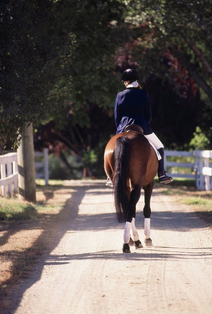 Stock Photo: 1575-6553 english style horse and rider, riding away