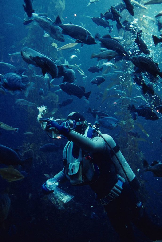 Diver feeing fish, Monteray Bay Aquarium : Stock Photo