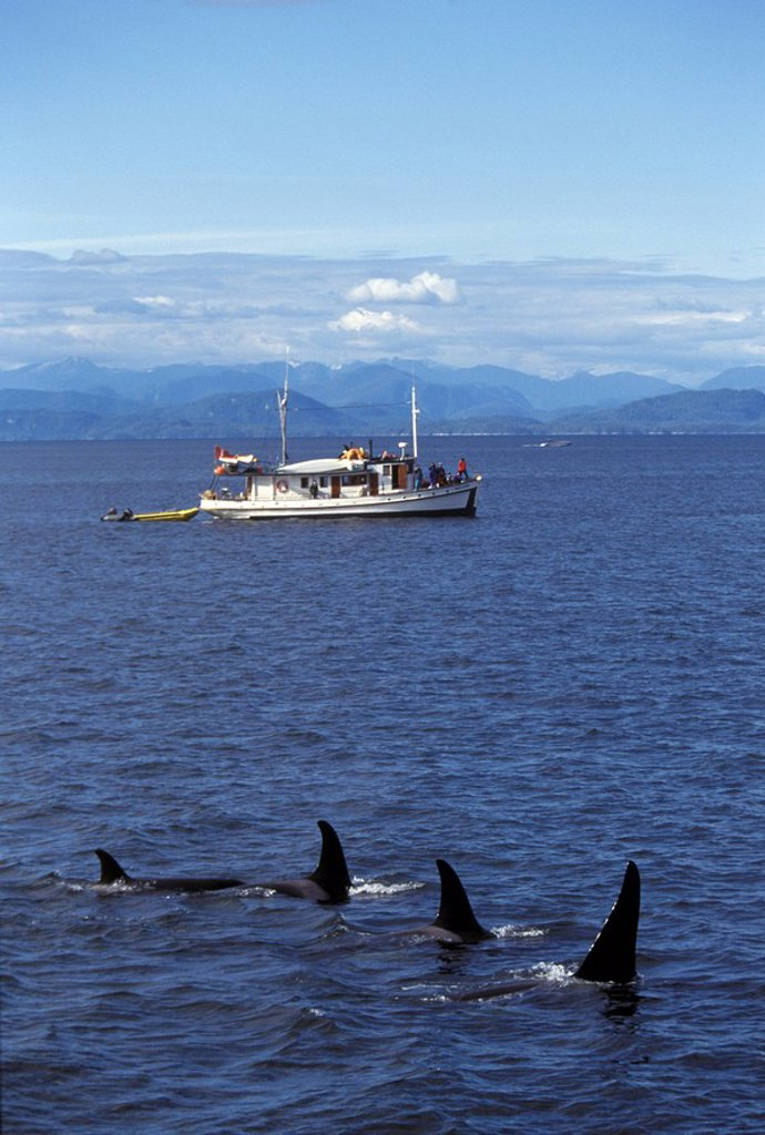Stock Photo: 1575-7929 Orca whale watching, Johnstone Straight, British Columbia, Canada