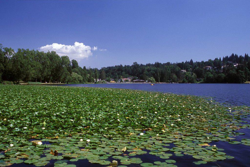 Deer Lake Park, Burnaby, British Columbia, Canada : Stock Photo
