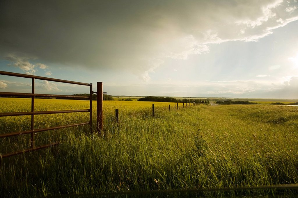 Storm clouds over field, Three Hills, Alberta, Canada : Stock Photo