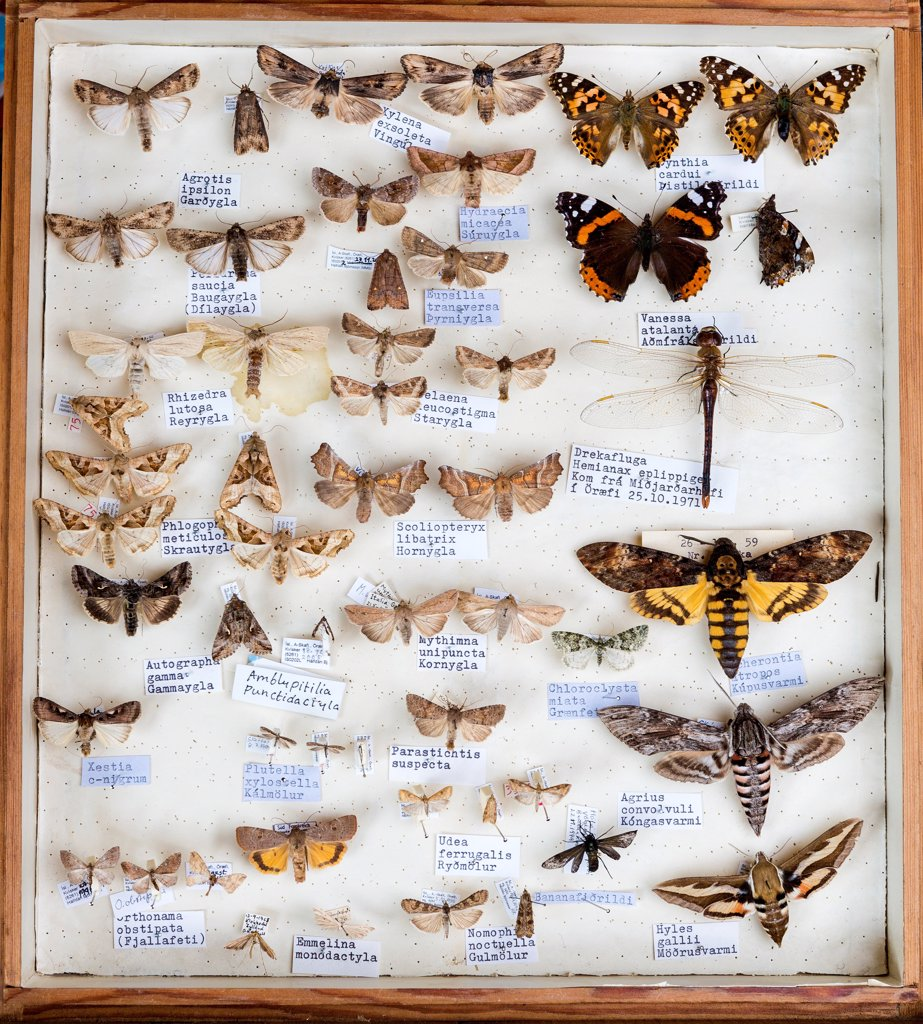 Stock Photo: 1580-869 Iceland, Framed insect collection