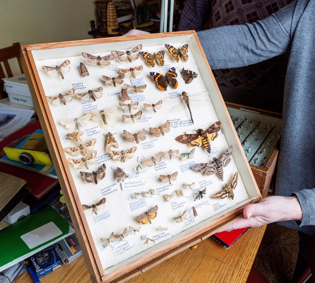 Stock Photo: 1580-870 Iceland, Framed insect collection