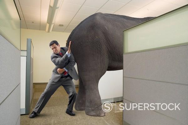 Stock Photo: 1589-131276 Mixed race businessman shoving elephant into cubicle