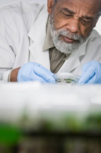 African American scientist working in laboratory : Stock Photo