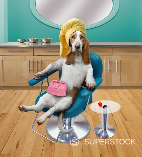 Stock Photo: 1589-143227 Dog sitting in beauty salon