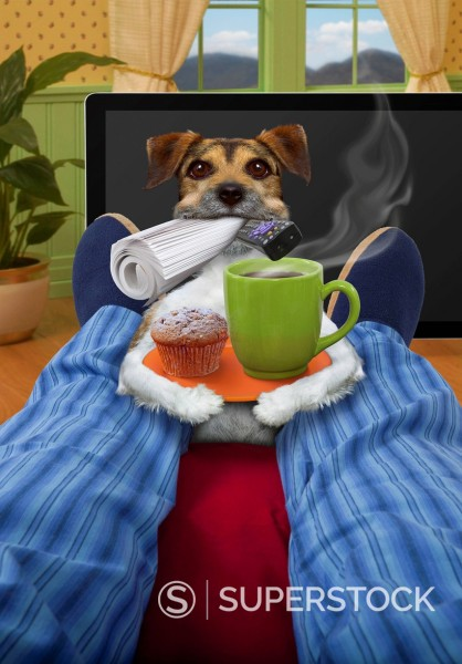 Stock Photo: 1589-143299 Jack Russell terrier bring breakfast to master
