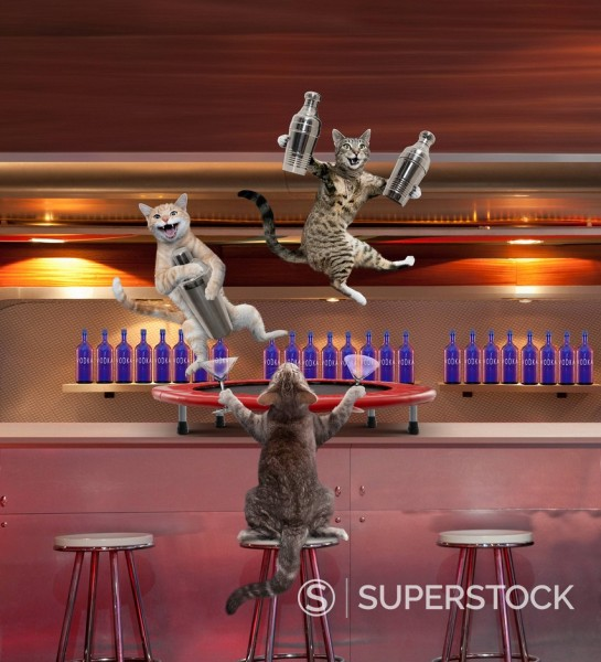Stock Photo: 1589-143311 Cats mixing cocktails in a bar