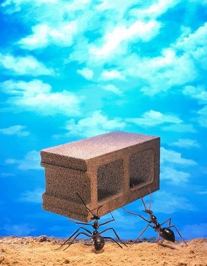 Ants moving concrete block : Stock Photo