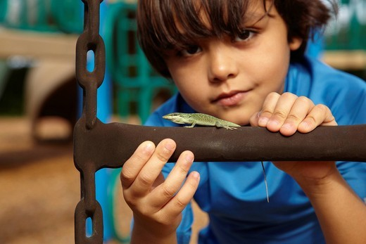 Mixed race boy looking at lizard : Stock Photo