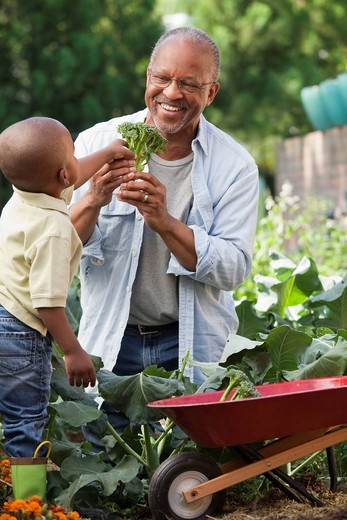 Black grandfather and grandson gardening : Stock Photo