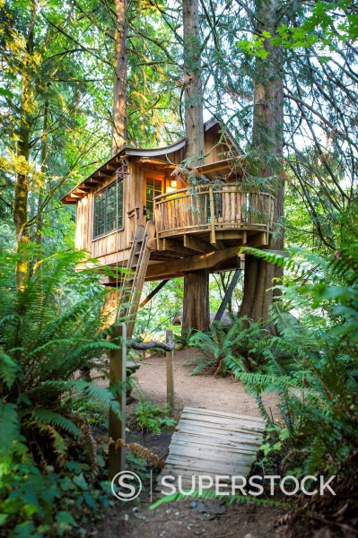 Stock Photo: 1589-172177 Remote tree house in forest