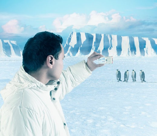 Asian man taking photograph of penguins : Stock Photo