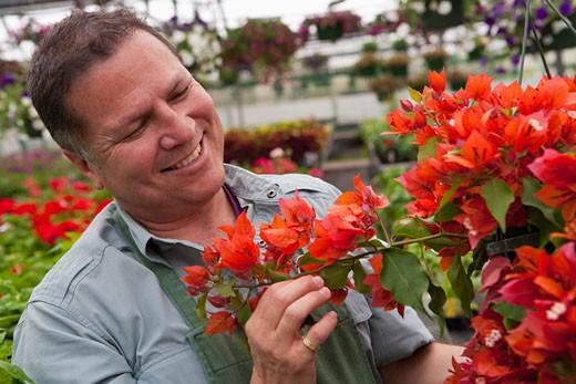 Hispanic man examining flower in nursery : Stock Photo