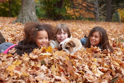 Children and dog playing in autumn leaves : Stock Photo