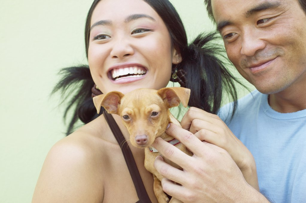 Stock Photo: 1589R-05532 Young woman and a mid adult man standing together holding a puppy dog