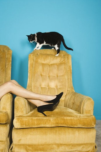 Stock Photo: 1589R-10760 WomanÃs legs in chair with cat