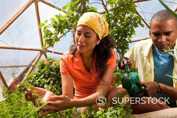 Woman and man watering plants in greenhouse : Stock Photo