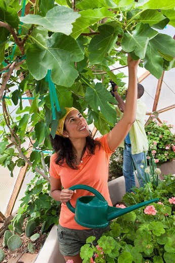 Ecuadorian woman watering plants in greenhouse : Stock Photo