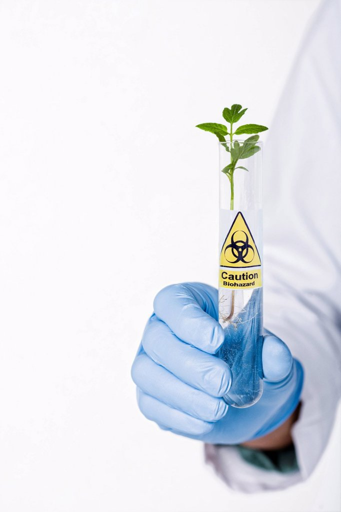 Stock Photo: 1589R-134798 Hispanic scientist holding test tube with caution symbol containing sprout