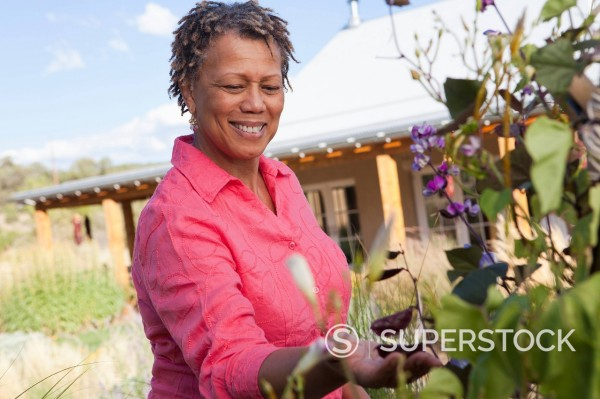 Black woman looking at flowers in garden : Stock Photo