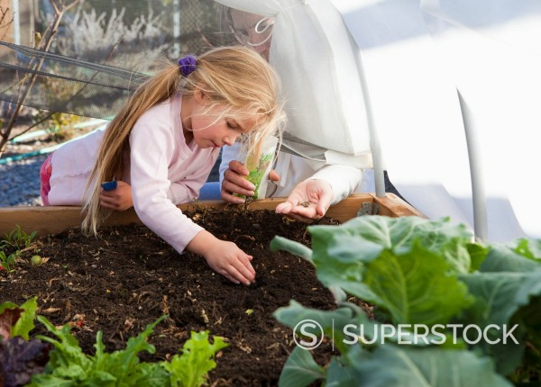 Stock Photo: 1589R-138484 Caucasian girl planting seeds in garden