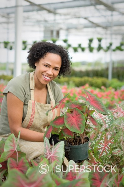 Stock Photo: 1589R-148884 African American worker tending to plants in greenhouse