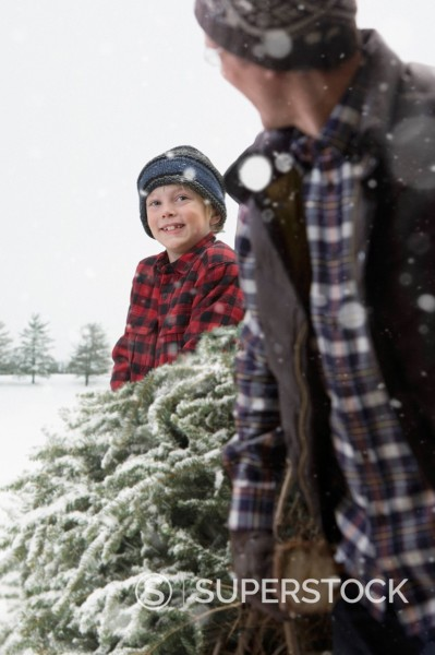 Caucasian father and son carrying Christmas tree through the snow : Stock Photo