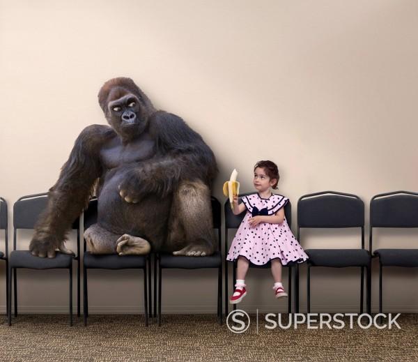 Caucasian girl offering banana to gorilla : Stock Photo