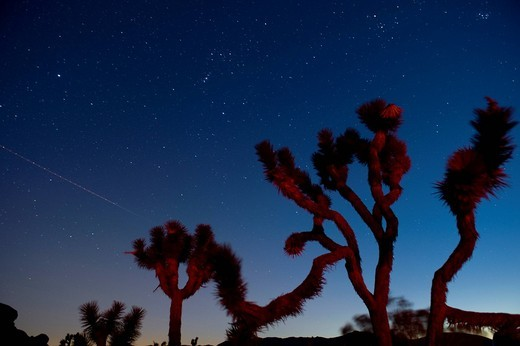 Stars in sky over unusual trees : Stock Photo